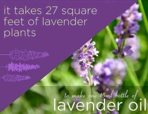 You Get What You Pay For - Lavender Essential Oil