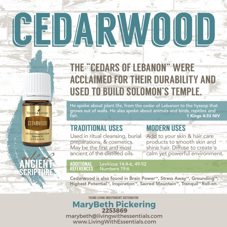 Essential Oils in the Bible - Cedarwood Essential Oil