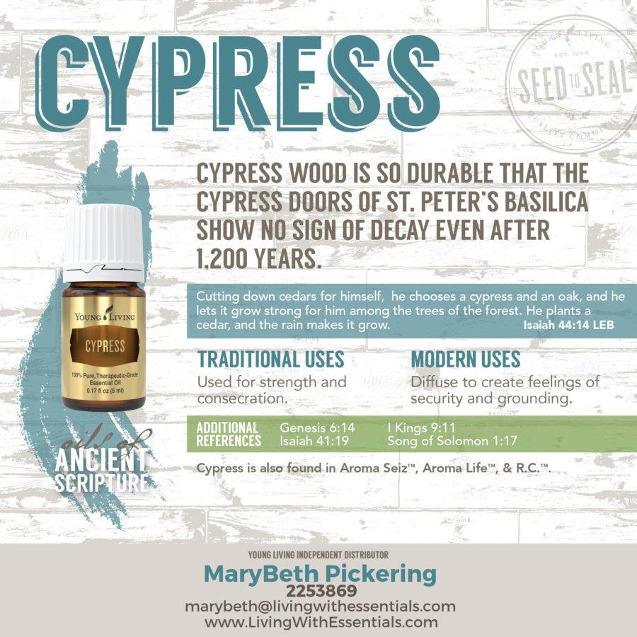 Essential Oils in the Bible - Cypress Essential Oil